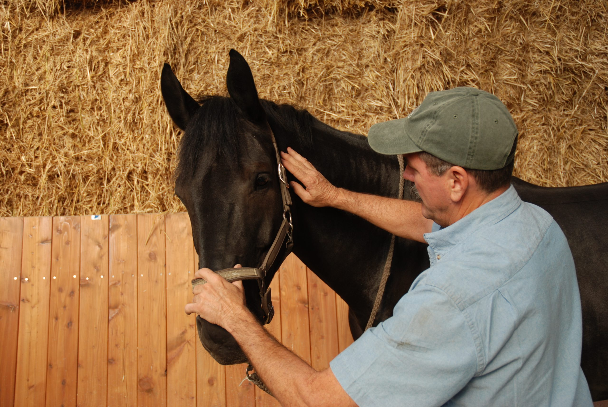 When the horse braces or pulls, soften both hands and shoulders. When he softens, ask again.